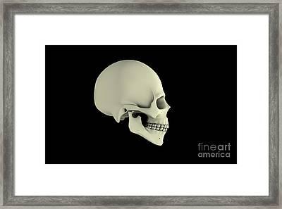 Side View Of Human Skull Framed Print by Stocktrek Images
