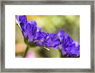 Sideview Framed Print by Caitlyn  Grasso
