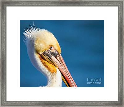 Framed Print featuring the photograph Sideview by Dale Nelson