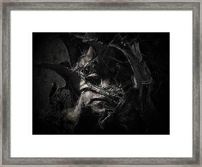 Sids Last Day Framed Print by David Fox