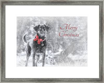 Sienna - Merry Christmas Framed Print