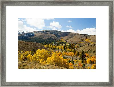 Sierra Foliage Framed Print by Jim Snyder