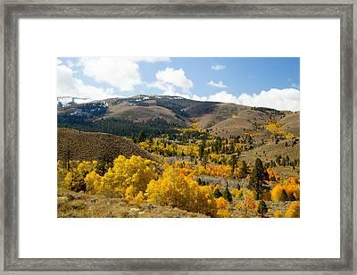 Sierra Foliage Framed Print
