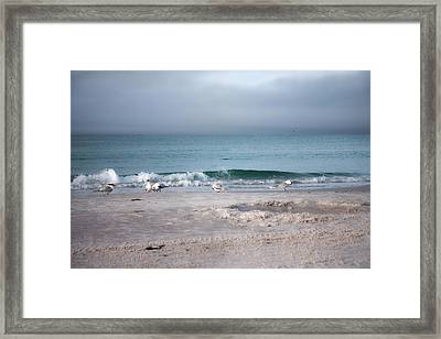 Siesta Key Morning Gulls Framed Print