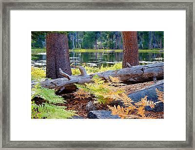 Siesta Lake Framed Print