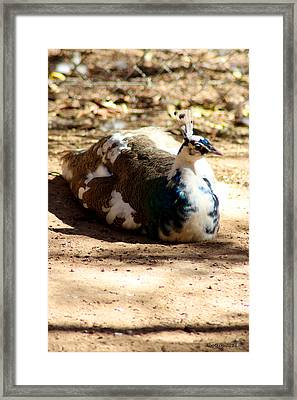 Siesta Time Framed Print by Dick Botkin