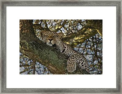 Framed Print featuring the photograph Siesta Time by Gary Hall