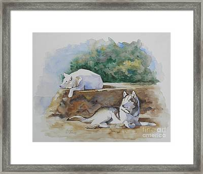 Siesta Time Framed Print by Suzanne Schaefer