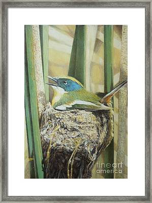 Siete Colores - Many Coloured Rush Tyrant Framed Print