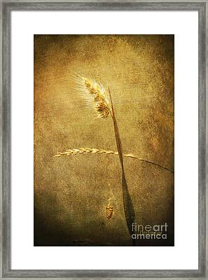 Framed Print featuring the photograph Sighing Of Changes by Chris Armytage