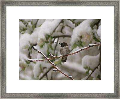 Sight Rarely Seen Framed Print by Darlene Grubbs