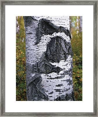 Sign Of Age Framed Print