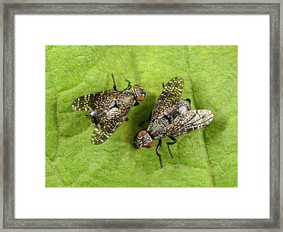 Signal Flies Framed Print by Nigel Downer