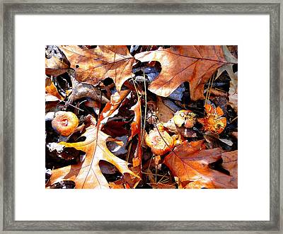 Signs Of Autumn Framed Print by Cindy Croal