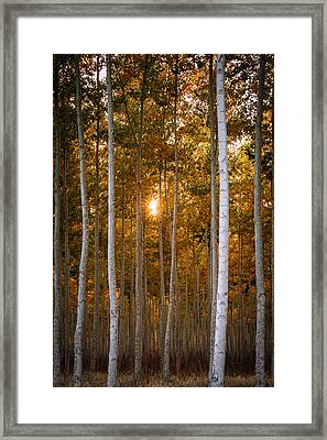 Signs Of Autumn Framed Print by Dan Mihai