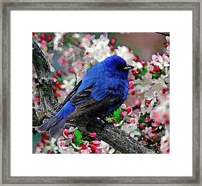 Signs Of Spring Framed Print by Cole Black