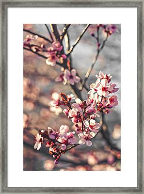 Framed Print featuring the photograph Signs Of Spring by Joshua Minso