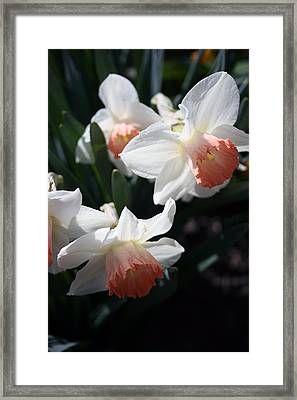 Framed Print featuring the photograph Signs Of Spring by Kay Novy