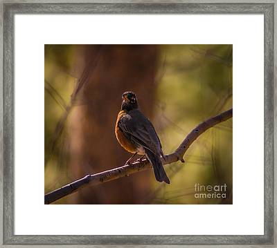 Signs Of Spring Framed Print by Mitch Shindelbower