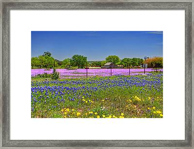 Signs Of Spring Framed Print by Tom Weisbrook