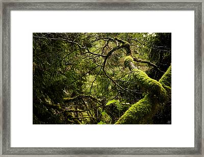 Silence In The Green Forest Framed Print