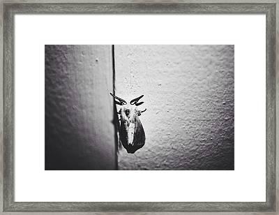 Silence Framed Print by Lexi K