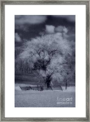 Silence Of Nature Framed Print