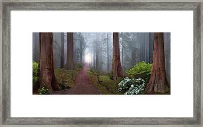 Silence Of The Forest Framed Print by David M ( Maclean )