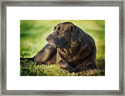 Framed Print featuring the photograph Silence by Sharon Jones