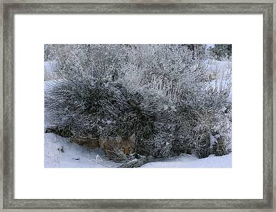 Silent Accord Framed Print