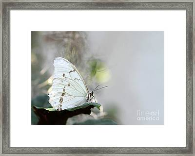 Silent Beauty Framed Print
