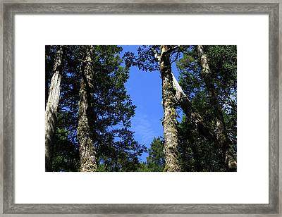 Silent Giants All Profits Go To Hospice Of The Calumet Area Framed Print