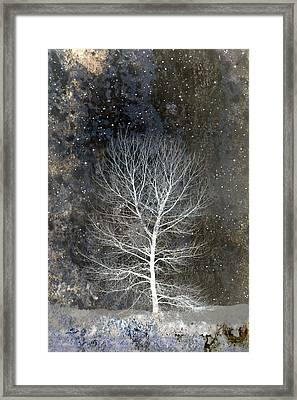 Silent Night Framed Print by Carol Leigh