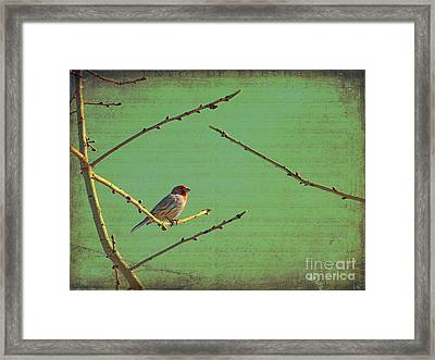 Silent Song Framed Print