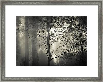 Silent Stirring Framed Print by Amy Weiss