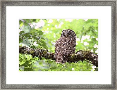 Silent Watcher Of The Woods Framed Print