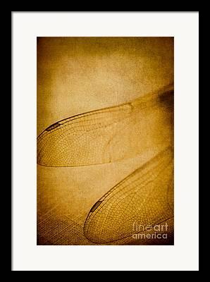 Gold Bug Framed Prints