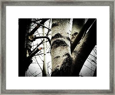 Framed Print featuring the photograph Silent Witness by Zinvolle Art