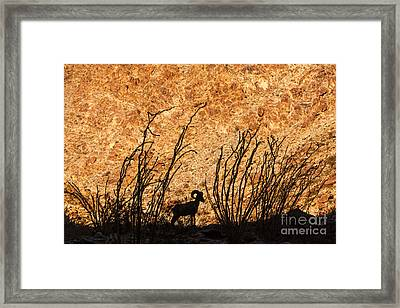 Silhouette Bighorn Sheep Framed Print by John Wadleigh
