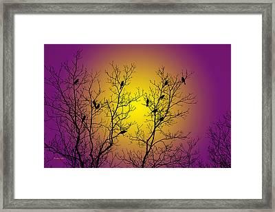 Silhouette Birds Framed Print