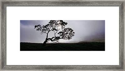 Silhouette Of A Koa Tree, Mauna Kea Framed Print