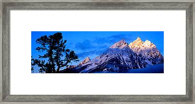 Silhouette Of A Limber Pine Pinus Framed Print by Panoramic Images