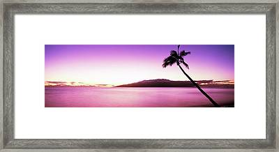 Silhouette Of A Palm Tree, Maui Framed Print by Panoramic Images
