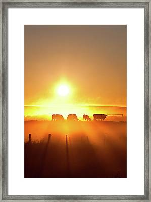 Silhouette Of Cattle Walking Across The Framed Print by Imaginegolf