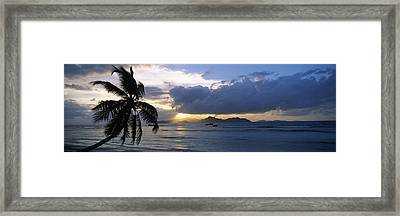 Silhouette Of Coconut Palm Tree Framed Print