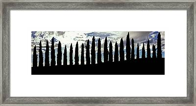 Silhouette Of Cypress Trees Framed Print by Panoramic Images