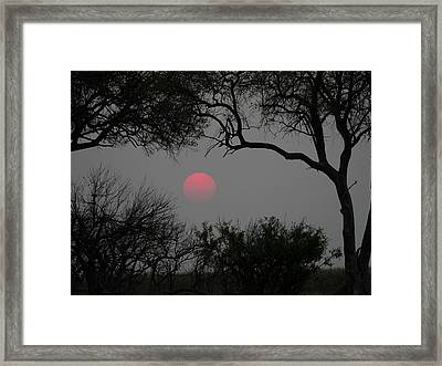 Silhouette Of Leadwood Trees At Dusk Framed Print by Panoramic Images
