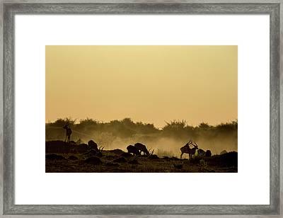 Silhouette Of Lechwe, Kobus Leche Framed Print by Beverly Joubert