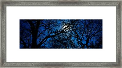 Silhouette Of Oak Trees, Texas, Usa Framed Print by Panoramic Images