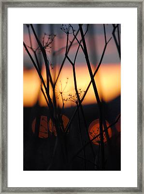 Framed Print featuring the photograph Silhouette Of Old Queens by Jani Freimann